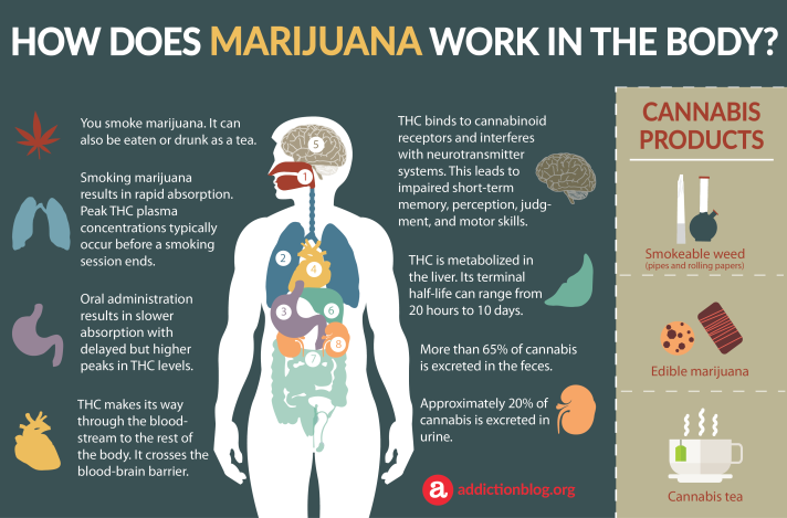 Marijuana-Metabolism-in-the-Body